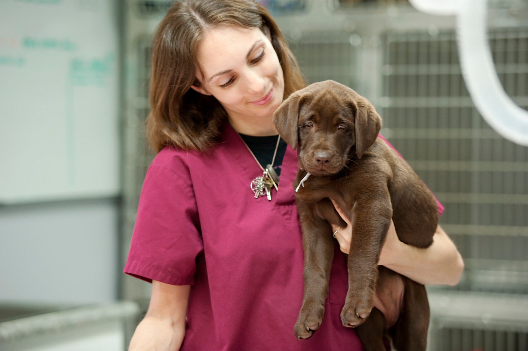 Woman carrying lab.jpeg